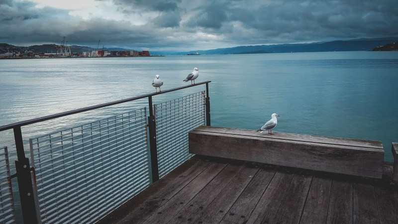 new-zealand-wellington-waterfront-travel-blog-redheadventurer-liza-laboheme (15)