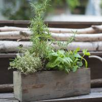 Container Herb Gardening: A Growing Trend