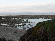 Seaweed, Dunany Co Louth