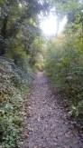Boyne Tow Path Autumn