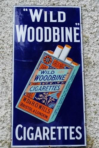 woodbine