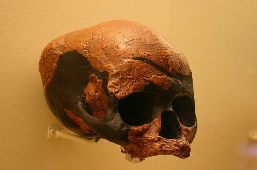 ¿Son los sapiens el resultado de mestizaje entre especies arcaicas?