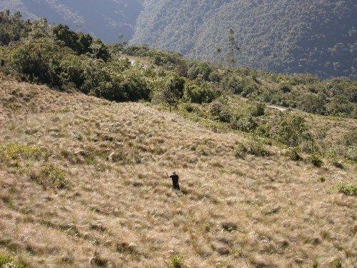 bosques peruanos