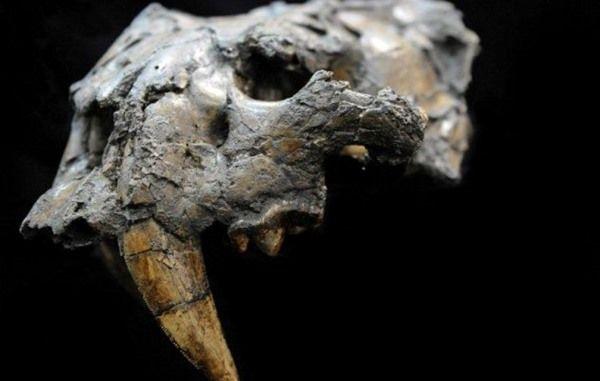esqueleto venezuela