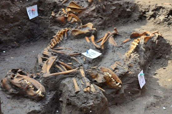 enterramiento canino azteca mexico