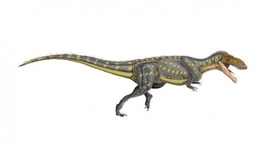 Torvosauros gurneyi
