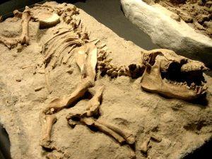 fosiles dinosaurios