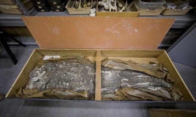 Esqueleto de 6.000 años de la ciudad de Ur