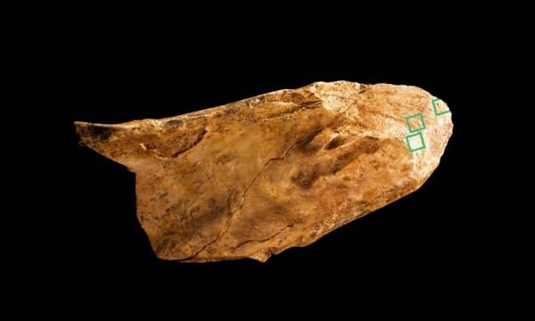 Las herramientas neandertales encontradas nos permiten saber que eran más inteligentes de lo que pensábamos.