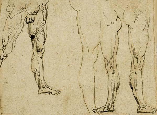Los dibujos de Leonardo a expocisión