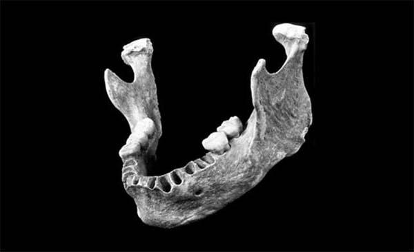 Mandíbula de neandertal. Crédito: Universidad de Harvard