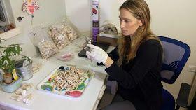 Lee Perry-Gal mide huesos de pollos en el laboratorio del Instituto Arqueológico de la Universidad de Haifa