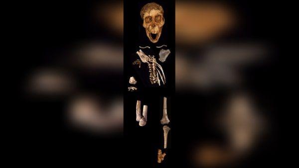 esqueleto selam columna vertebral