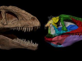 pepito dinosaurio españa