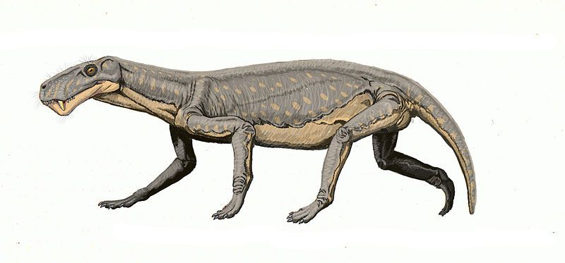 Lycaenops animal permico