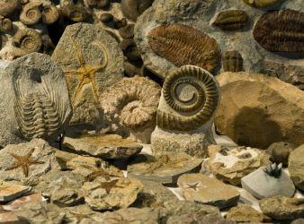 fosiles eon fanerozoico