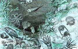 periodo silurico fauna