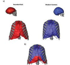 capacidad pulmonar neandertal