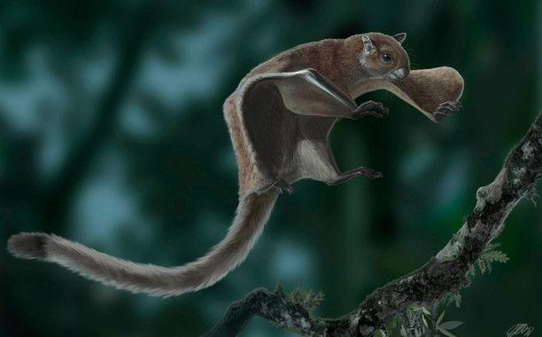 ardilla voladora miopetaurista