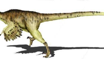 Dinosaurios Orden Ornithischia Red Historia Por su parte los restos de dinosaurios ornitisquios fueron poco. dinosaurios orden ornithischia red