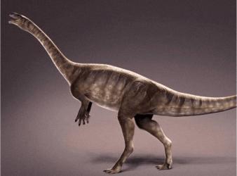 Macrocollum itaquii dinosaurio cuello largo mas antiguo