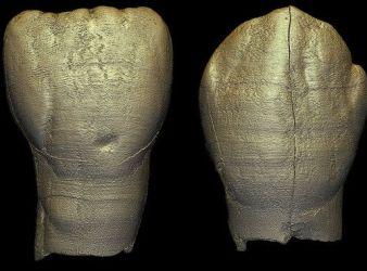 dientes niño arcaico