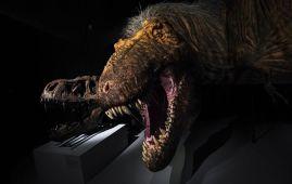 tyrannosaurus rex en el museo de historia natural de nyc