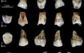 homínidos de Tongzi