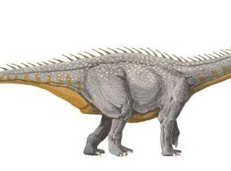 dinosaurio barapasaurus