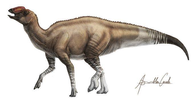 dinosaurio Aquilarhinus