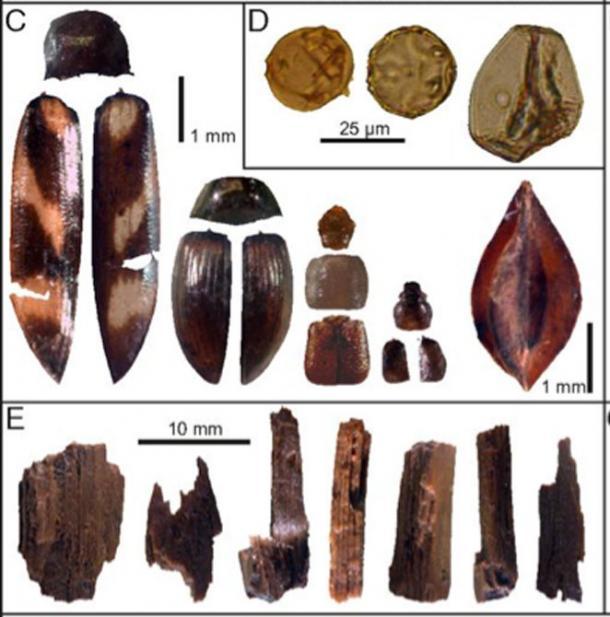 objetos vikingos canada