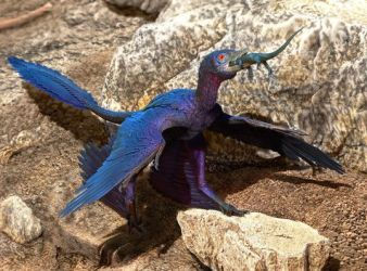 microraptor china