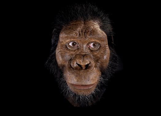 reconstruccion Australopithecus anamensis