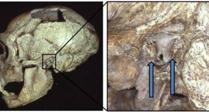 neandertales con oido de surfista