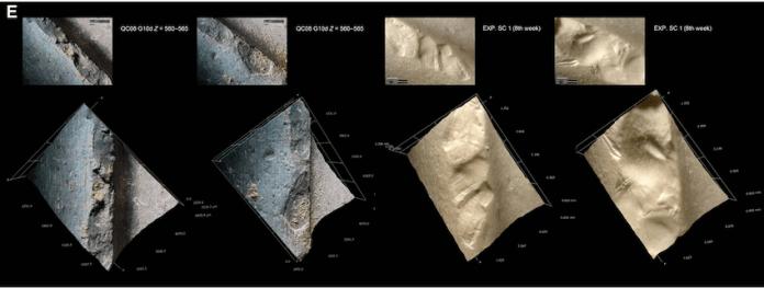 consumo medula osea 400000 años
