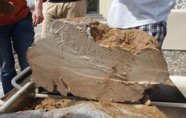 fosil coral oman
