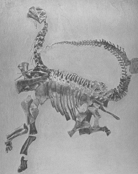 esqueleto camarasaurus
