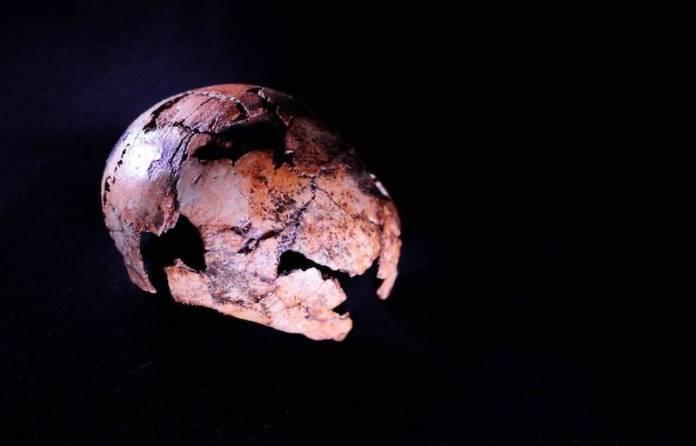 homo erectus mas antiguo