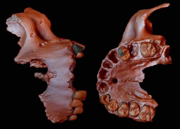 genetica humana mas antigua