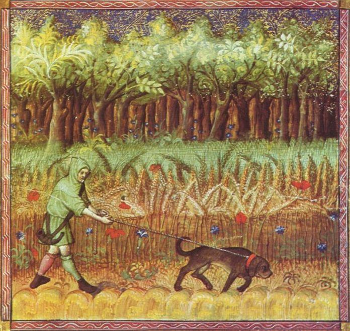 ilustración caza