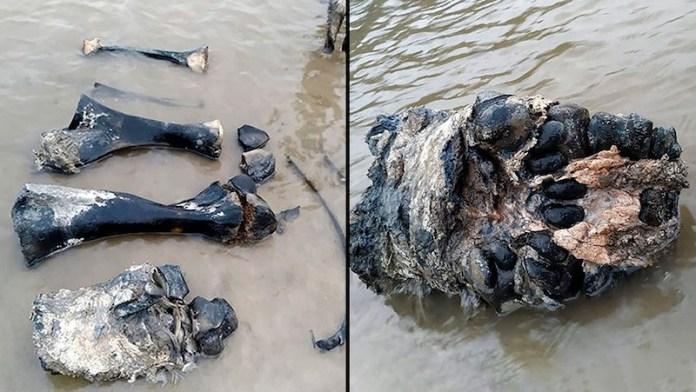 restos mamut siberia