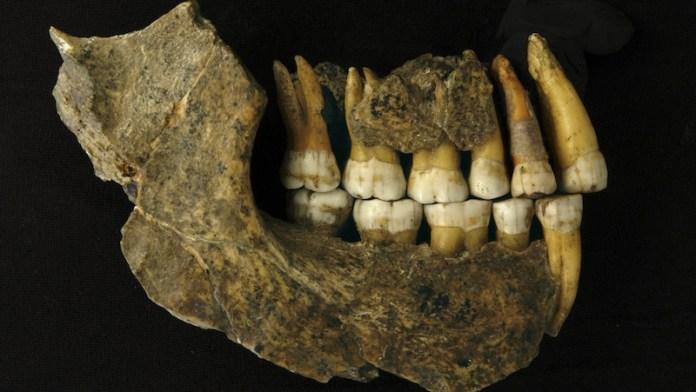 desaparicion neandertal noreste europa