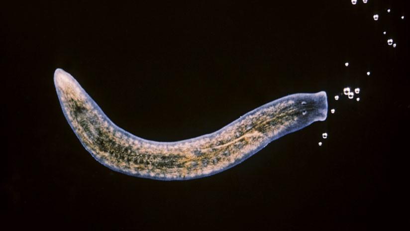 'Elixir de la vida': Aíslan a una célula capaz de regenerar todo el cuerpo