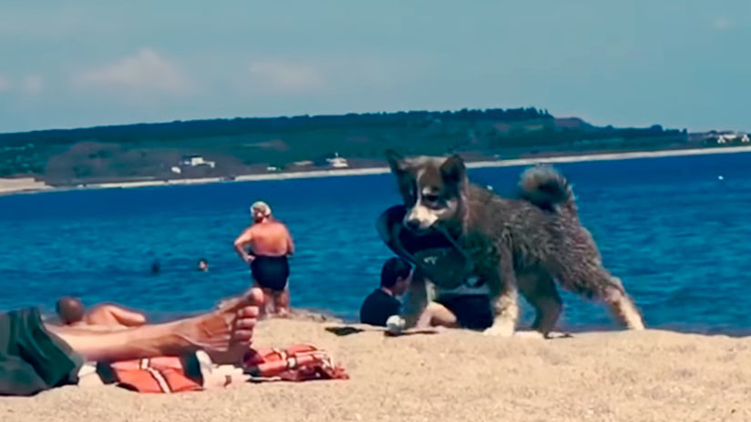 VIDEO ENTERNECEDOR: Un perrito 'roba' una chancla en una playa y su felicidad no tiene límite