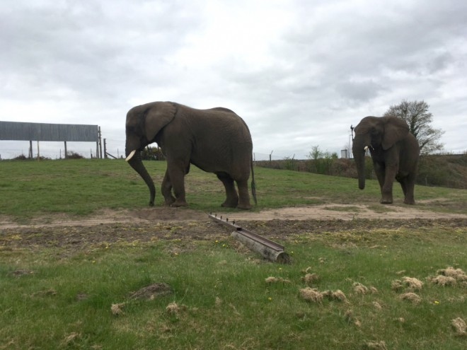 west midland safari park review, safari parks kids, elephants