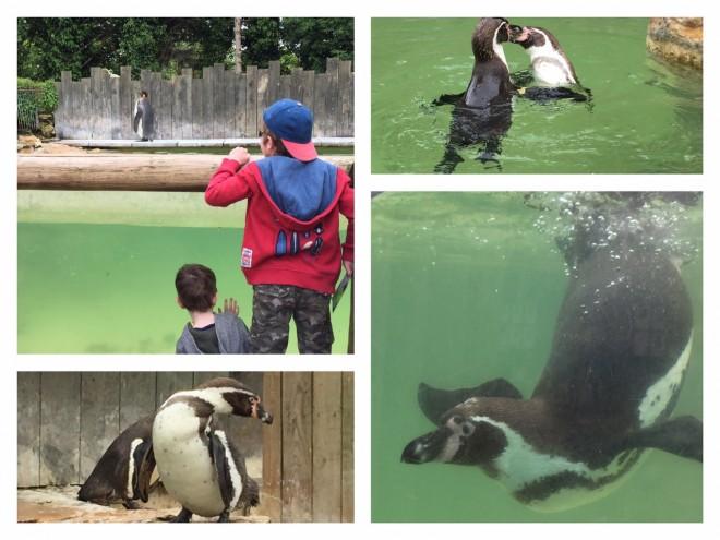 birdland, bourton on the water, penguin, flamingo, emu, feeding experiences