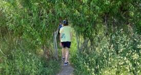 willow tunnel, willow den, willow sculpture