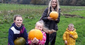 pumpkin picking cheshire, pumpkin patch cheshire
