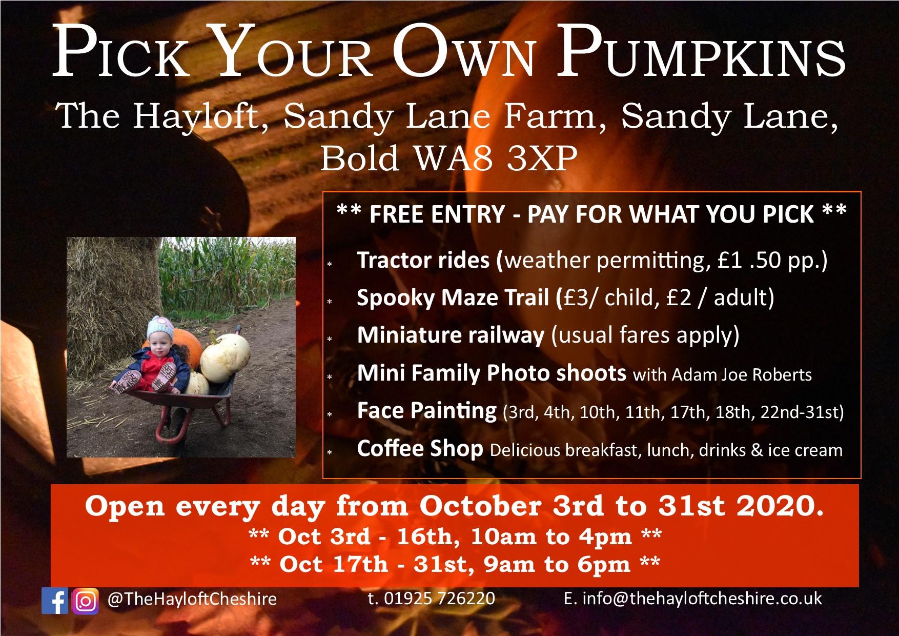 pumpkin picking widnes, pumpkin picking cheshire