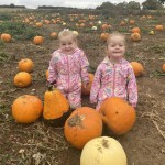 pumpkin patch buckinghamshire, pumpkin picking milton keynes, pumpkins towcester